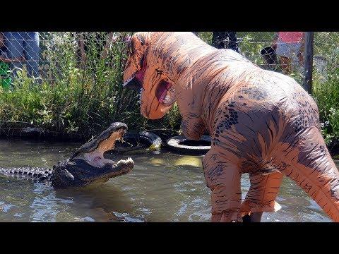 男子假扮成恐龙,调戏湖里的鳄鱼,结果鳄鱼的反应让人惊讶!