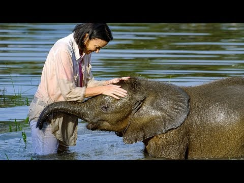 Baby elephant overcomes fear of water | BBC Earth