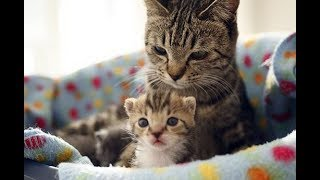 Какая заботливая мама и очаровательные детки зверушки   Очень милое видео про зверей