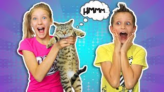 We spent $1000 on Cat Toys!!!
