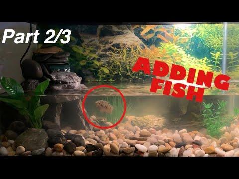 FINISHING MY TURTLE TANK & ADDING FISH (Part 2)