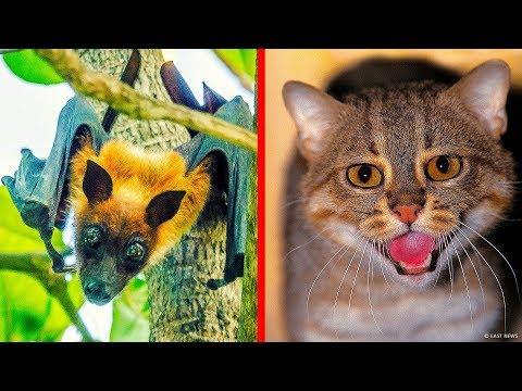 7-dos-animais-mais-raros-encontrados-na-índia