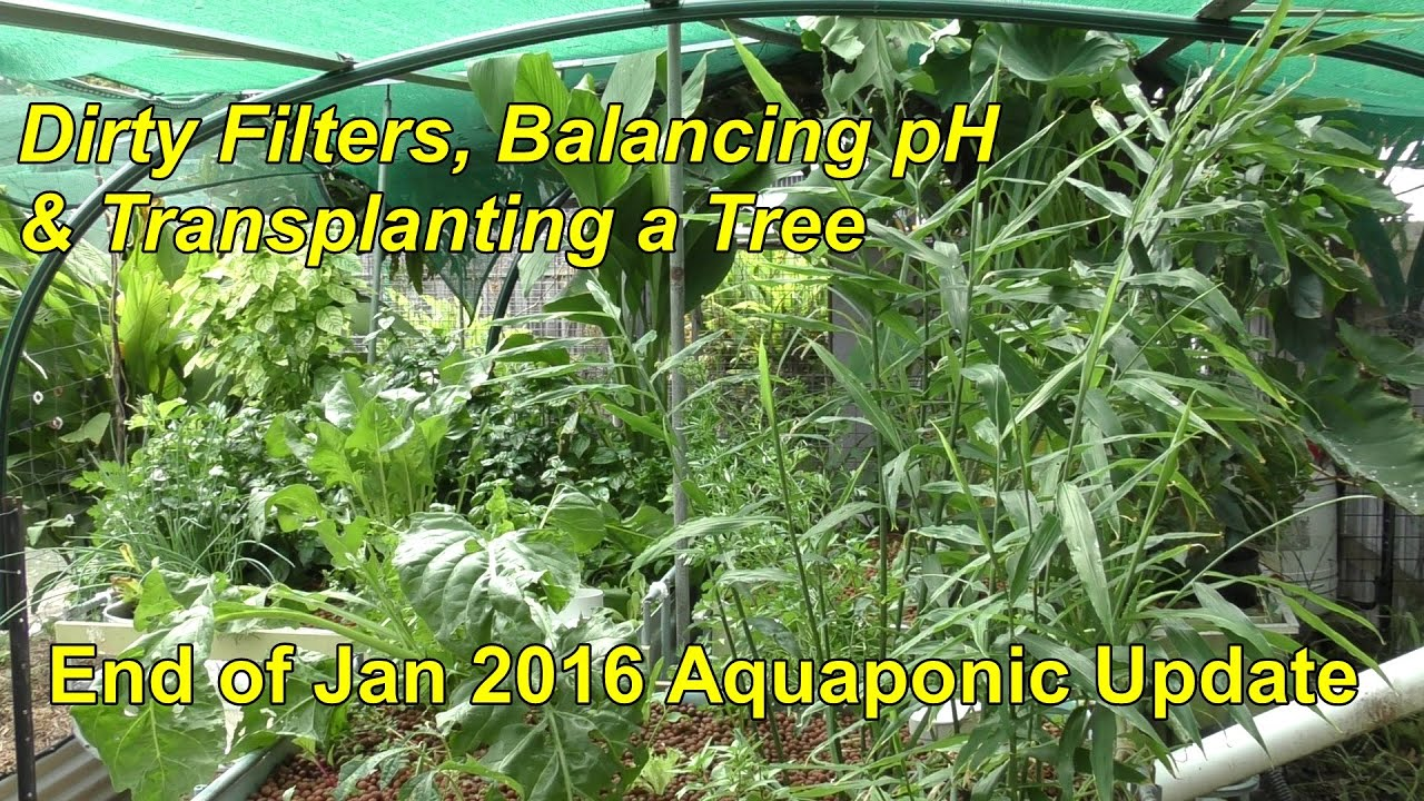 aquaponic update dirty filters balancing ph u0026 transplanting a
