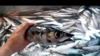 Рейс №1 Рыбалка Севастополя (Процесс работы)