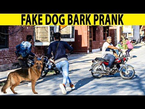 Fake Dog Bark Prank | Prank in Pakistan | Lahori PrankStar