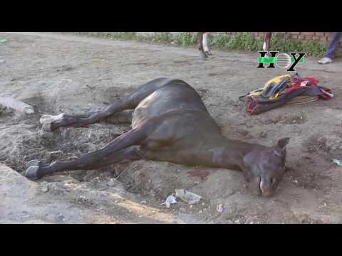 Borracho, atropelló y mató a un caballo en barrio Hipódromo