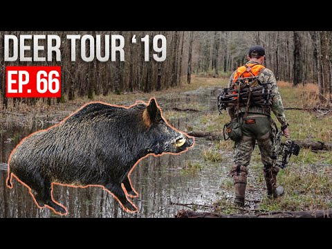 MISSISSIPPI FLOOD! - Hunting HOGS And DEER On Public Land!