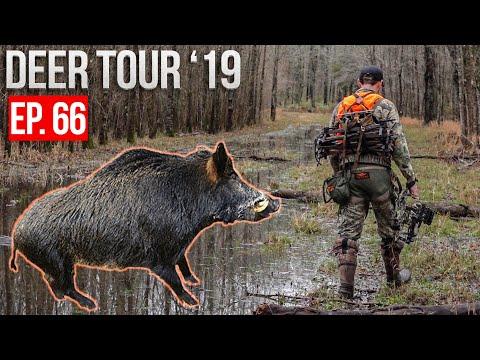 MISSISSIPPI FLOOD! - Hunting HOGS And DEER On Public Land!