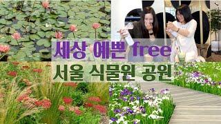 서울 나들이 데이트 코스 | 붓꽃, 연꽃 세상인 서울식…