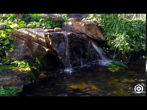 Winter Gardens Aberdeen - Water