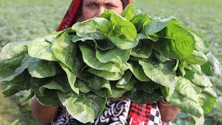 Village Food Farm Fresh Spinach Recipe Village Style Delicious Fresh Spinach & Potato Fry Cooking