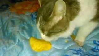Сенсациия кот съел СОБАКУ +18