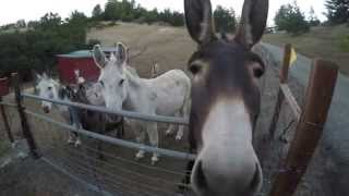 GoPro Hero4 Black 4K Hungry Donkeys - Part 1