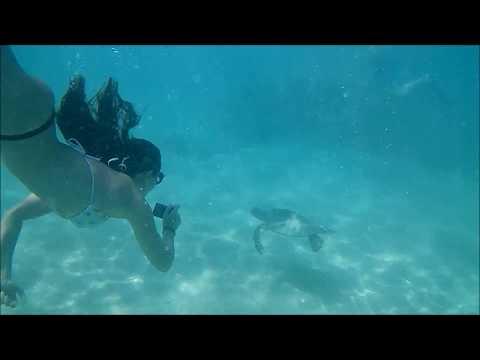 Swimming with a Sea Turtle at Hanauma Bay, Best Snorkeling on Oahu Island, Honolulu, Hawaii