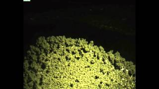 Dendritický růst zinku při nabíjecích cyklech Ni-Zn akumulátoru
