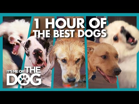The TOP 5 Badly Behaved Dogs of 2019 | It's Me or The Dog