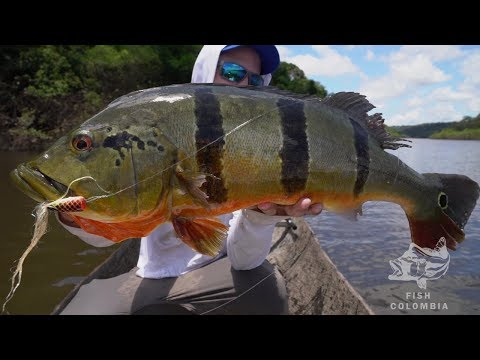 THE BEST PEACOCK BASS FLY FISHING VIDEO EVER