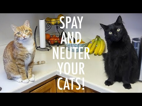 SPAY and NEUTER your CATS! - ft. Jackson Galaxy