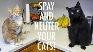 SPAY and NEUTER your CATS!  ft. Jackson Galaxy
