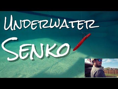 Underwater Senko - Bass Fishing Beast