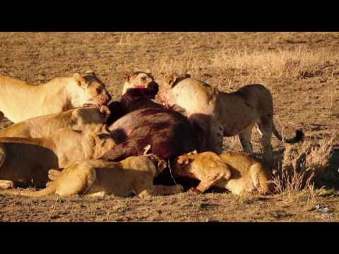 Tanzania Safari with Kilidove Tours