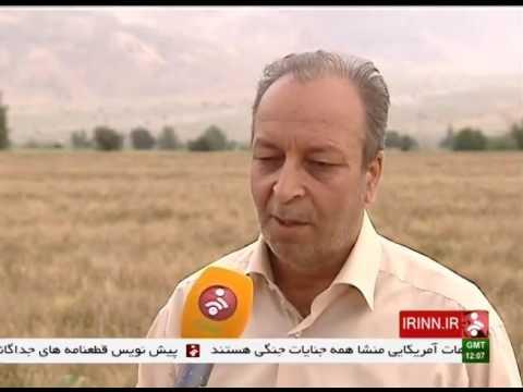 Iran Pakdasht county, Mechanized Wheat harvest برداشت مكانيزه گندم شهرستان پاكدشت ورامين ايران