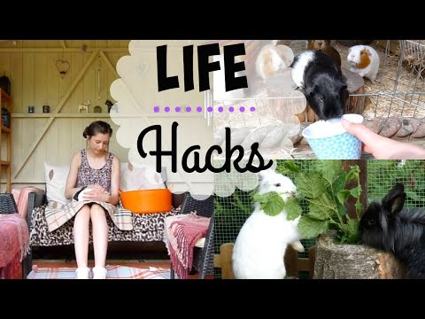 Life Hacks For Guinea Pigs & Rabbits