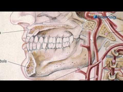 ízületi sinusitis kezelés)