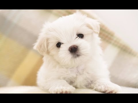 Dogs Saying 'I Love You' [HD 2014]