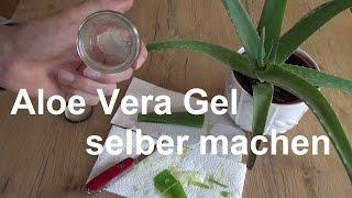 Aloe Vera Gel selber machen Aloe Vera Creme selbst gemacht