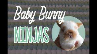 Baby Bunny Ninjas on a Human Jungle Gym