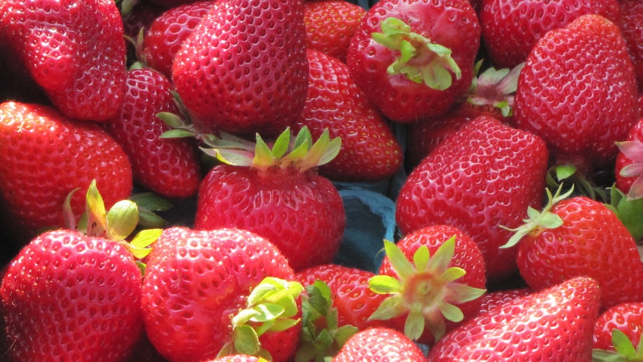 The Albion Strawberry Everbearing June Through October
