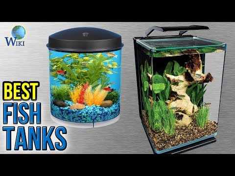 8 Best Fish Tanks 2017