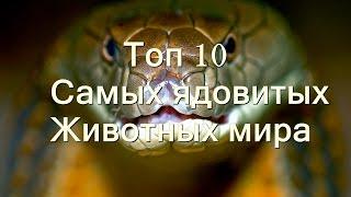 Топ 10 самых ядовитых животных мира