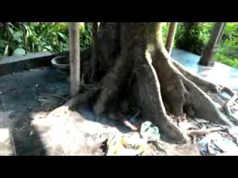 Inilah tempat sejarah  Sumur  Gemuling Desa sumberejo Kec Ambulu Jember