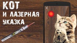 Кот играет с лазерной указкой (Cat plays with laser pointer)