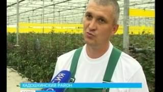 В Кадошкине выращивают новые сорта роз