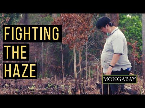 Meet Bambang Hero Saharjo, Indonesia's go-to expert witness against haze-causing plantation firms