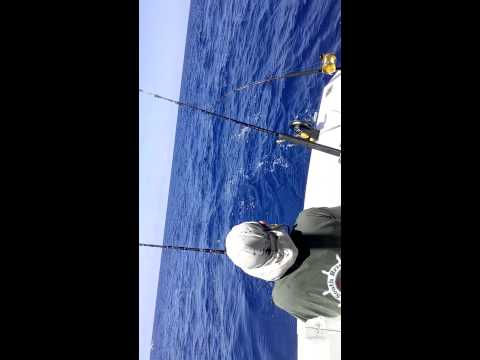 Bill Fitch catching  Dorado - Cozumel