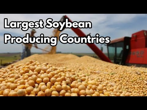 Top 11 Largest Soybean Producing Countries In The World