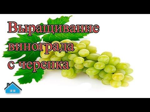«Отцы ели кислый виноград, а у детей на зубах оскомина