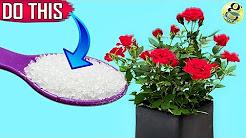 GARDEN SECRETS TO GET 500% MORE FLOWERS   10 Surefire Ways to Boost Blooms