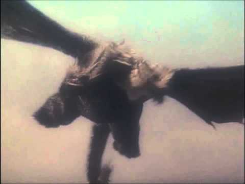 Godzilla Vs King Ghidorah-Japan Air Self Defense Force