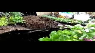 Kebun Minimalis Bagaimana Cara Membuat Vertical Garden