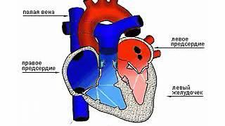 8  Движение крови в сердце