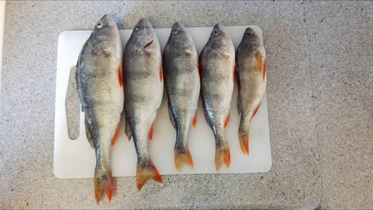 Рыбалка на Финском заливе   Выборгский залив   Троллинг   Окунь