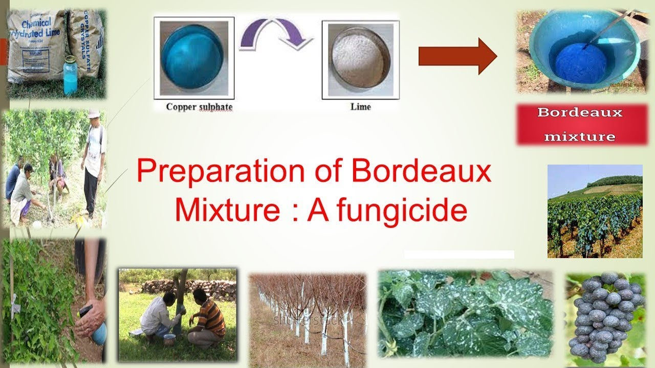 Bordeaux mixture: cooking and use