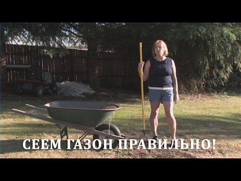 Как посеять газонную траву своими руками видео