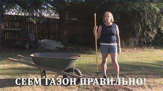 видео правильно посеять газонную траву