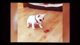 FUNNY DOGS & CATS 2018